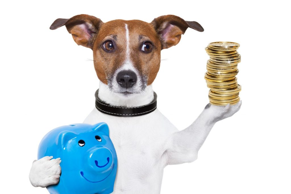 17986277 - dog holding a  blue piggy bank and a stack of coins