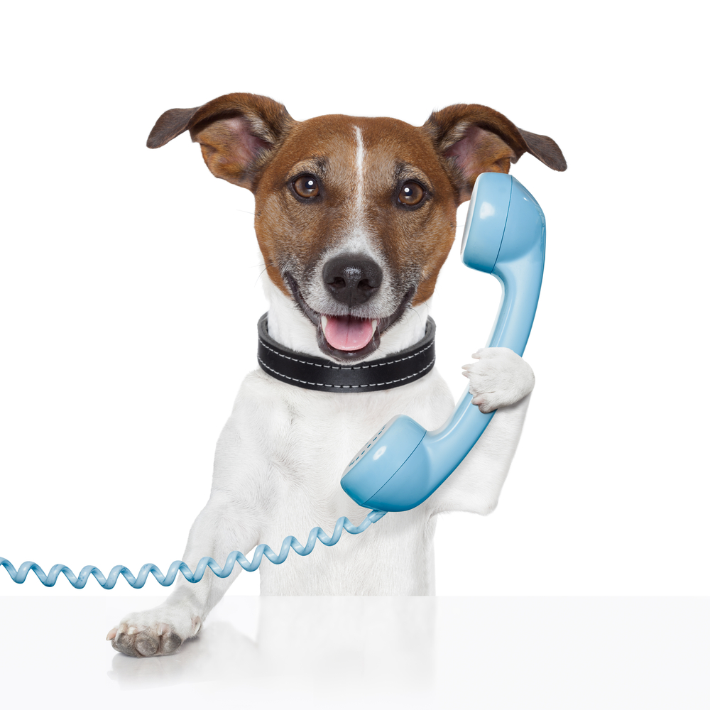 dog-on-BLUE-phone